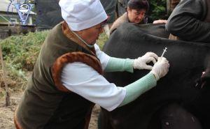 В Луганске отчитались о завершении вакцинации