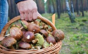 За сутки на Луганщине участились случаи отравления грибами