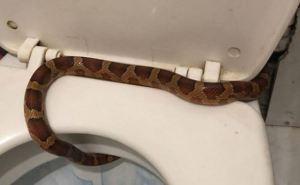 В Луганске и области змеи пробираются в квартиры через унитазы