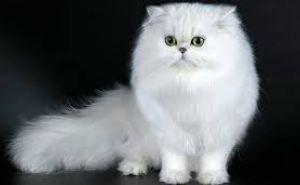 Из-за котенка в Сватово ввели карантинную зону размером почти 10 квадратных киллометров