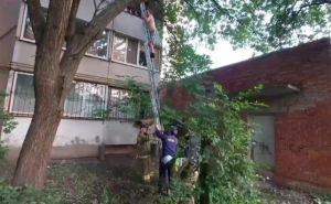 Луганчанин рано утром залез на чужой абрикос «набрать на варенье», а слезть сам не смог. ФОТО