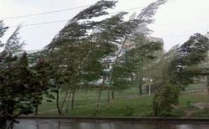 Завтра в Луганске опять сильный ветер. Возможны обрывы электропроводов,  падение рекламных щитов и веток деревьев.