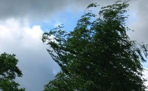 Сегодня вечером резко усилится ветер, возможен обрыв электропроводов, падение деревьев и рекламных щитов