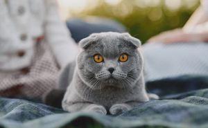 Выйду утром в поле с котом: как приучить питомца к прогулкам?