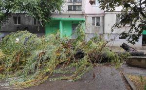 Деревья в Луганске представляют реальную угрозу жизни и здоровью горожан. Администрация ничего не делает