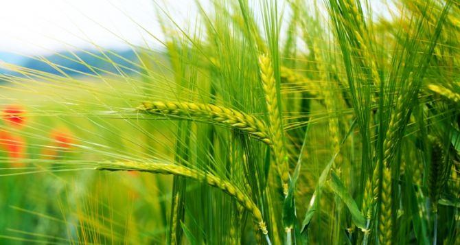 Синоптики рассказали, какая погода ждет аграриев в 2014 году