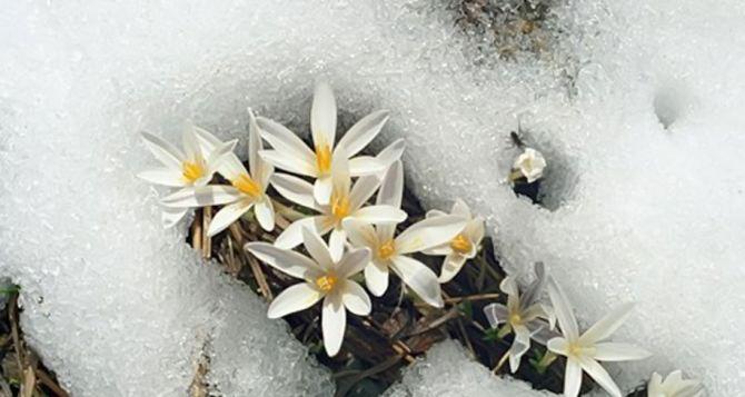 Синоптики рассказали, когда в Луганск придет весна