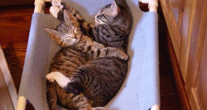 От чего и как лечат кошки?