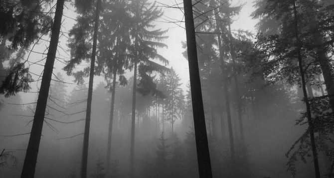 Туман видимость в условиях тумана
