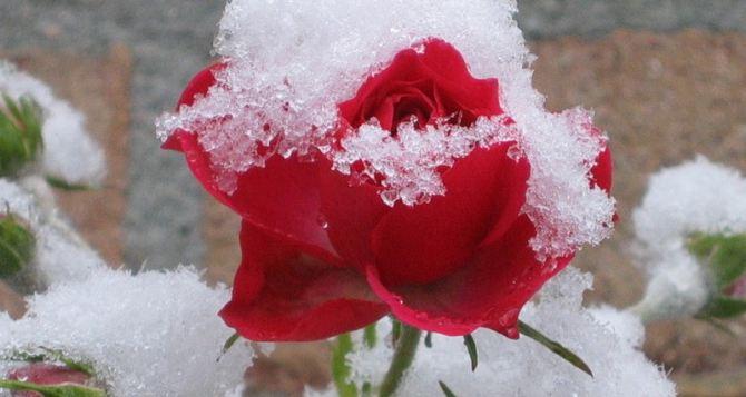 Синоптики рассказали, когда в Луганск придут заморозки