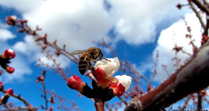 В Луганске вот-вот начнут цвести деревья