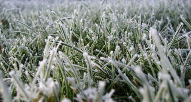 В Украине ожидаются заморозки до -5°С
