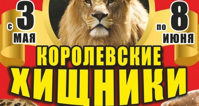 Луганчан ждет встреча с «королевскими хищниками»