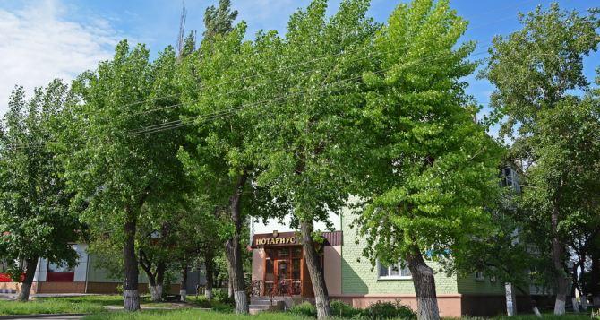 Сквер им. Молодой Гвардии в Луганске преобразится следующей весной