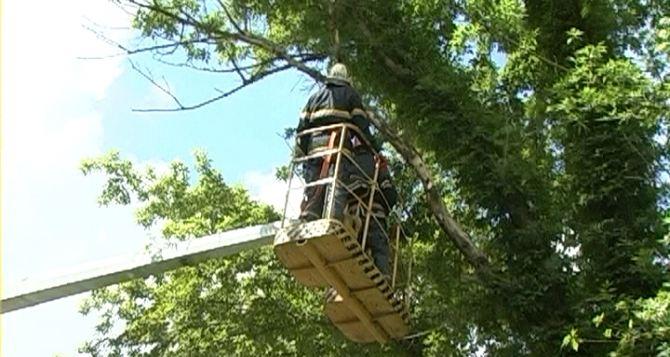 В Луганске спилили деревья возле бомбоубежища