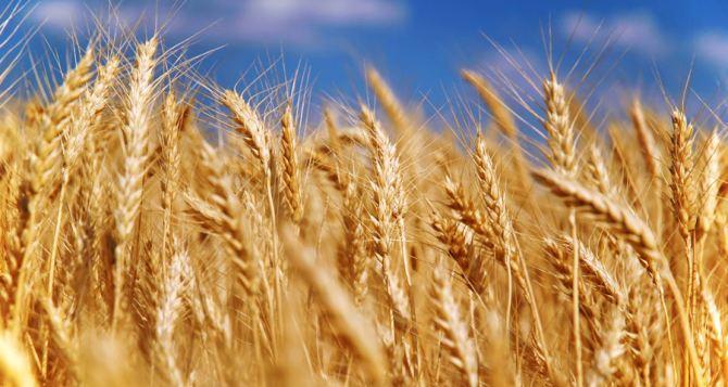 Из-за боевых действий Украина потеряет 1,5 млн тонн зерна