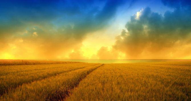 Боевые действия в Донецкой области приводят к потере урожая. —ДонОГА