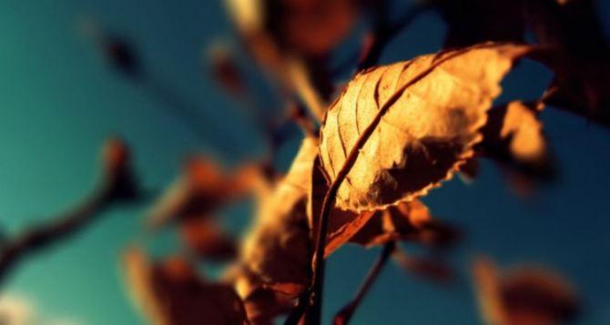 Синоптики обещают резкое похолодание на этой неделе