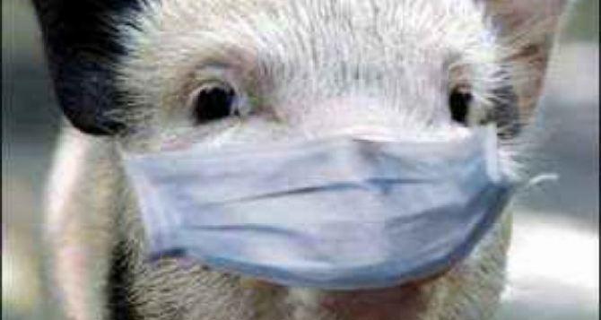 Африканской чумы свиней в Харьковской области не зафиксировано