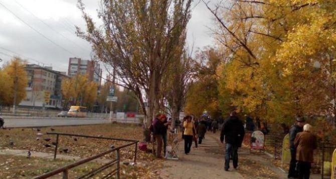 В Луганске ремонтируют уличное освещение, убирают дороги и тротуары, обрезают к зиме розы