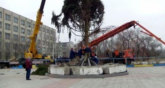 Главную елку Луганской области привезли из Закарпатья специальным автопоездом (фото)