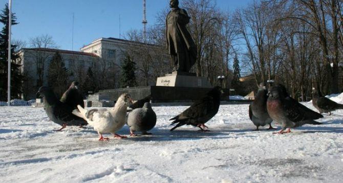 Местные жители рассказали о ситуации в Луганске 15января