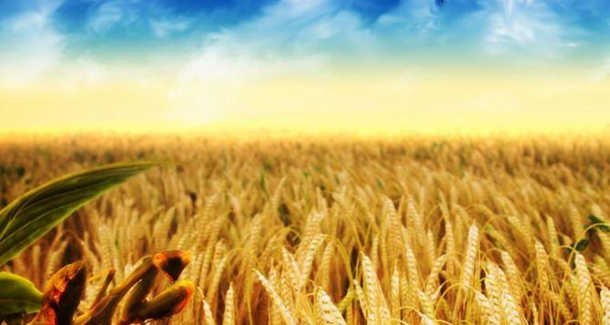 В самопровозглашенной ЛНР заявили, что уже засеяли 70% полей