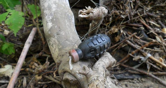 В Луганской области у местных жителей продолжают изымать боеприпасы и оружие