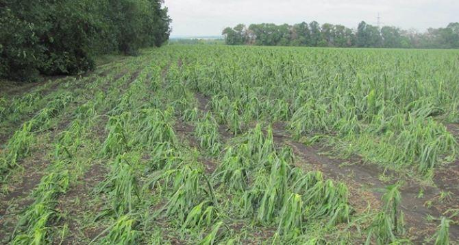 В Харьковской области град повредил посевы