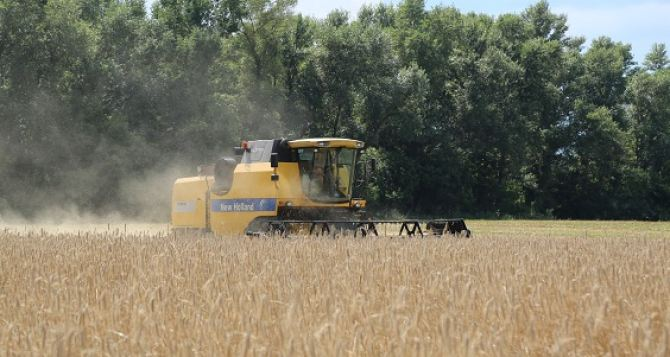 В Харьковской области— рекордный урожай пшеницы