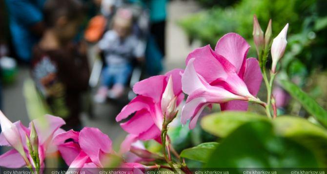 В Харькове открылась традиционная выставка цветов (фото)