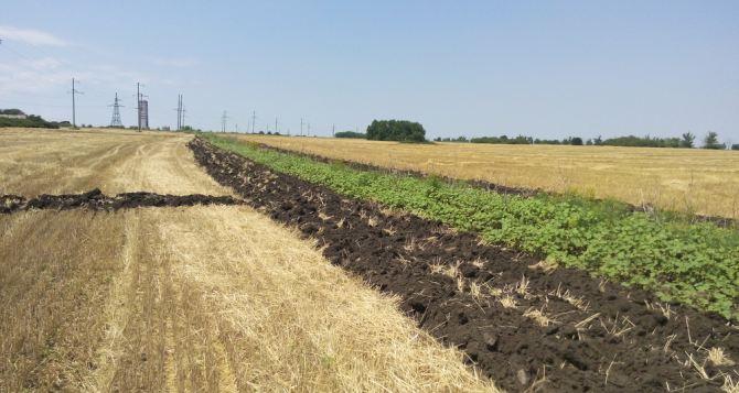 Аграрии самопровозглашенной ЛНР собрали 150 тыс. тонн зерна