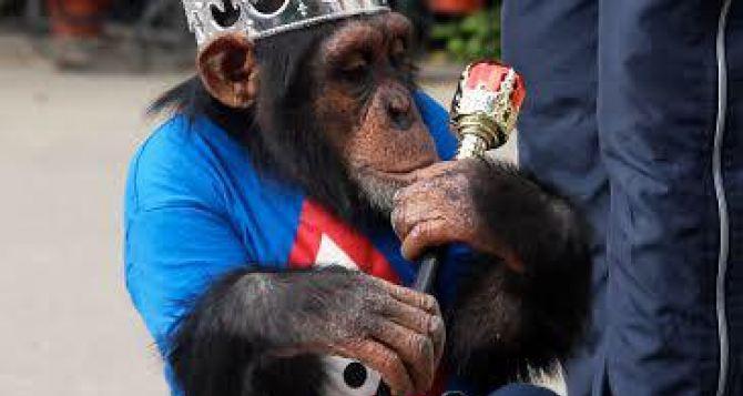 В Харькове мэром стала обезьяна