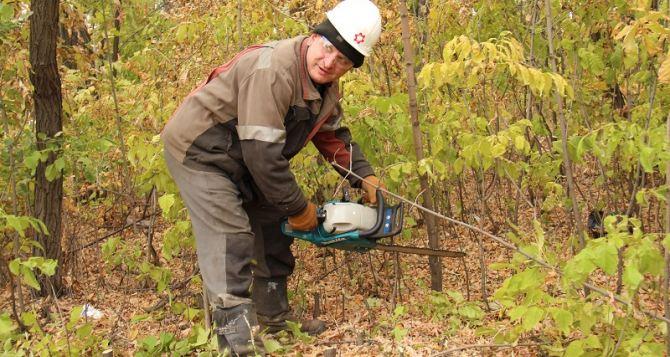 Волонтеры «Краснодонугля» высадили 200 молодых деревьев (фото)