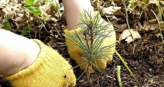 В Лутугино высадили около 200 фруктовых деревьев в новом парке