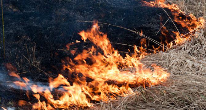 За сутки в самопровозглашенной ЛНР произошло 14 пожаров