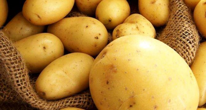 В Донецкой области собрали 362 тысячи тонн картофеля