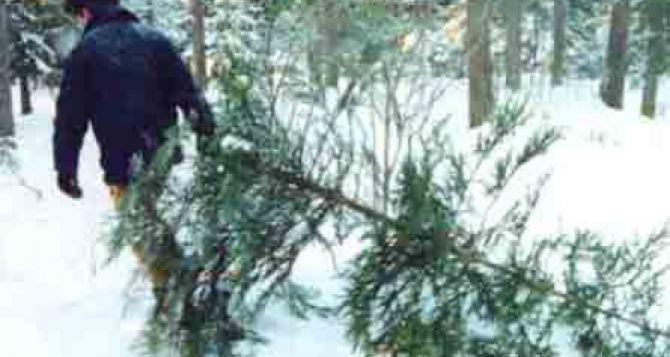 В декабре начнется операция «Новогодняя елка»