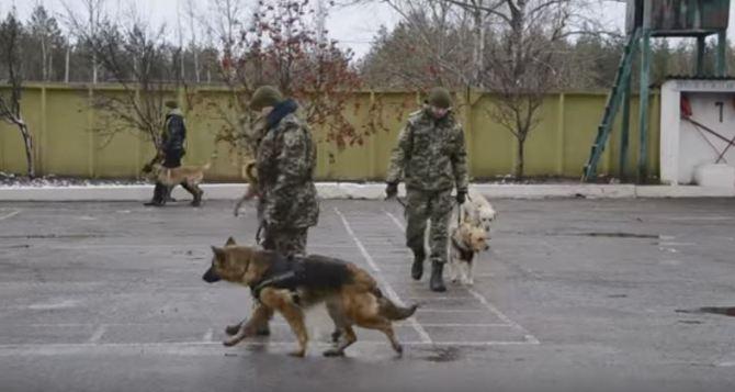 В Луганской области служебных собак одели в бронежилеты (видео)