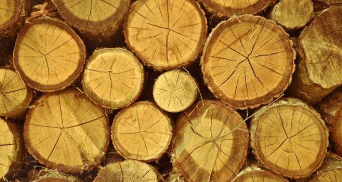 В Луганске идет незаконная вырубка деревьев