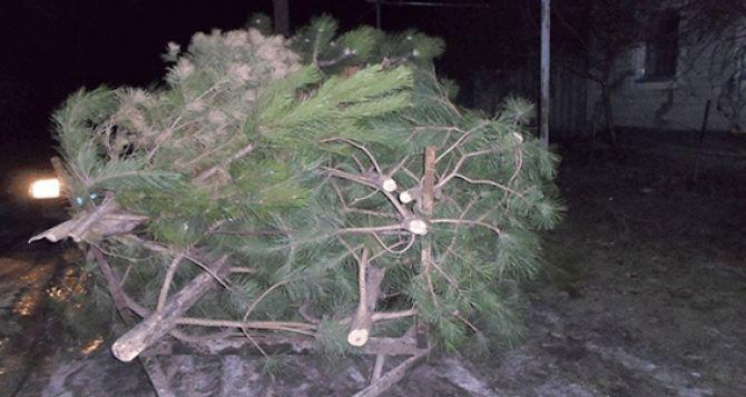 В Луганской области задержали группу лиц, которые незаконно вырубали елки (фото)