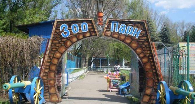Луганск послевоенный: в городском зоопарке зимуют 120 животных и птиц (видео)