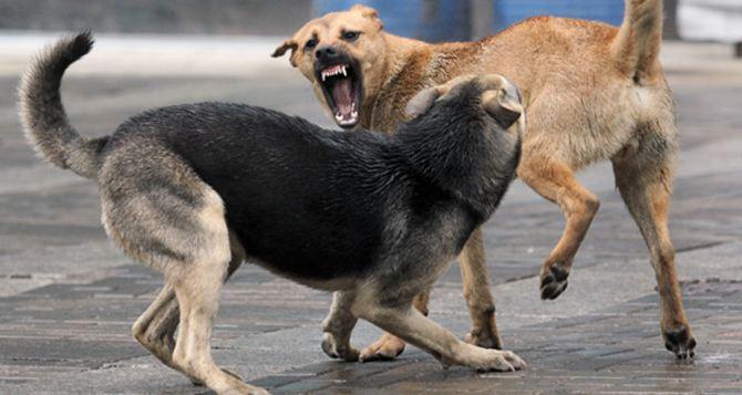 В Красном Луче будут отстреливать бродячих собак