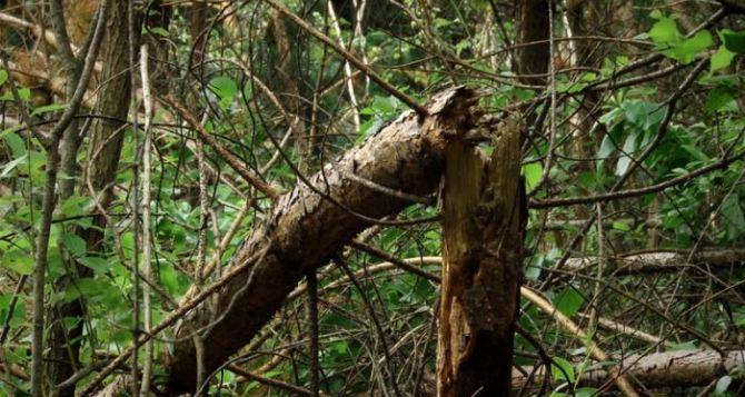 Харьковом пронесся шторм: сорваны крыши иповаленные деревья