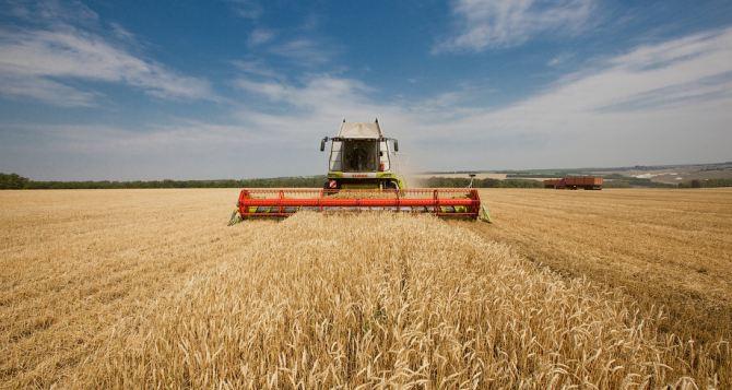 Аграрии ЛНР убрали более 75% площадей зерновых и зернобобовых культур