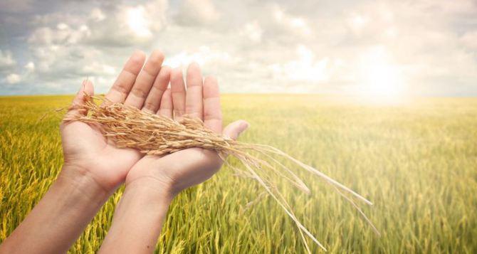ВОдесской области намолотили наибольший вал зерна