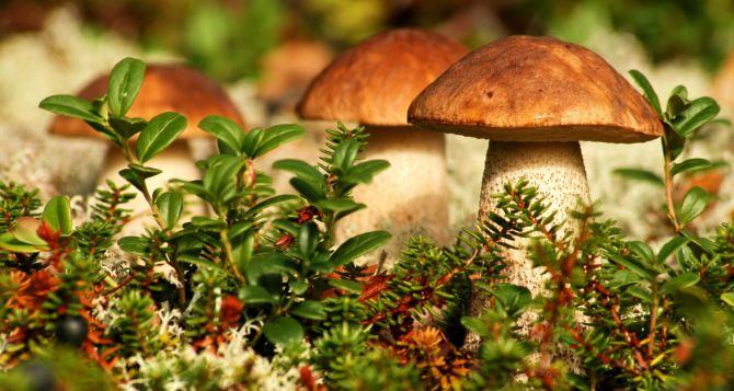 В Луганской области отравились грибами 10 человек