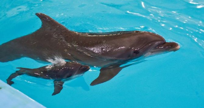 В Харькове проведут конкурс на лучшее имя для новорожденного дельфиненка
