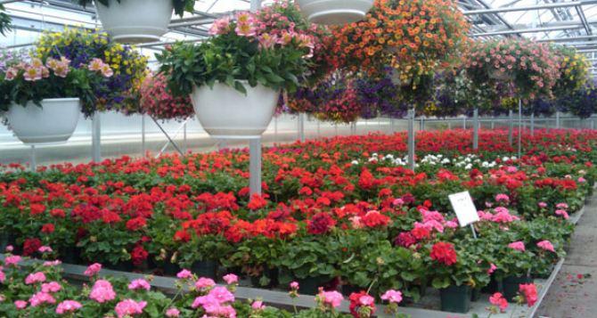 Луганские коммунальщики высеяли в теплицах 8 тыс. семян цветов