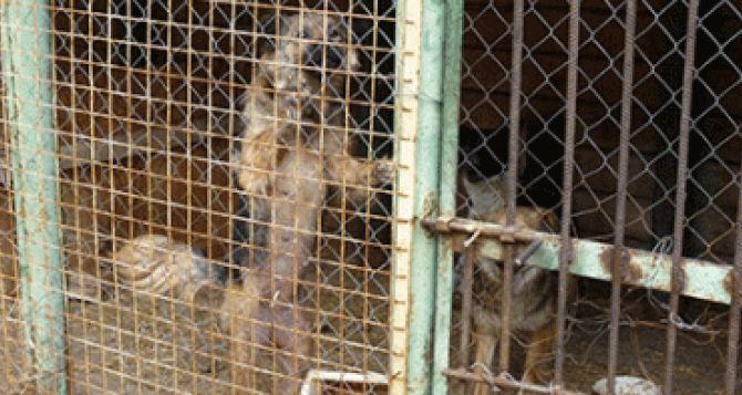 Бездомных собак из-под Донецка вывезут в Харьков